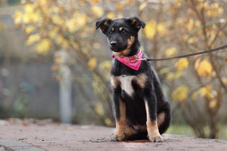 Поможем очаровательным щенкам найти хозяина и дом