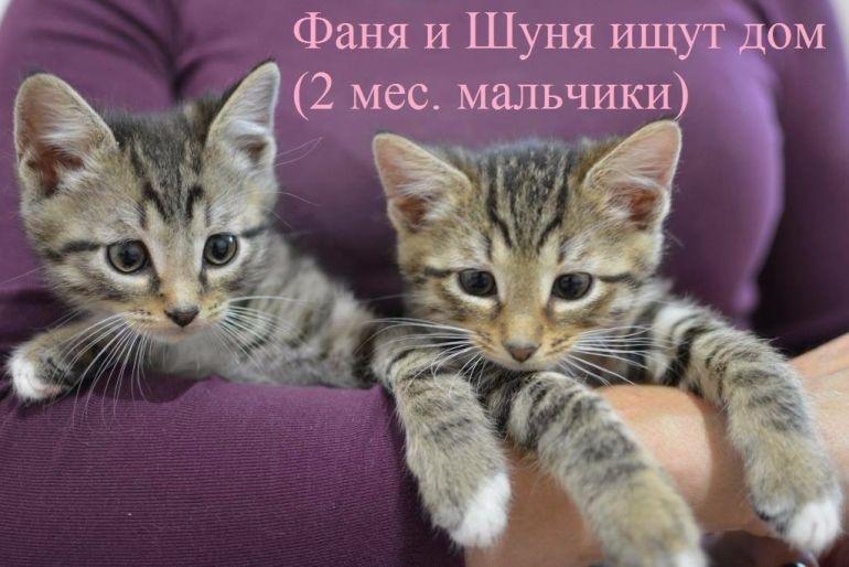 Четыре чудесных малюсеньких котёночка