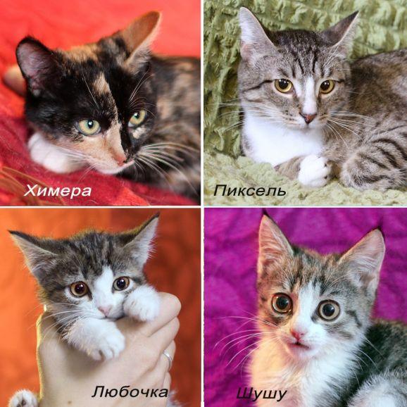 Котятки из приюта всех мастей. Мохнатым шалунам нужен дом