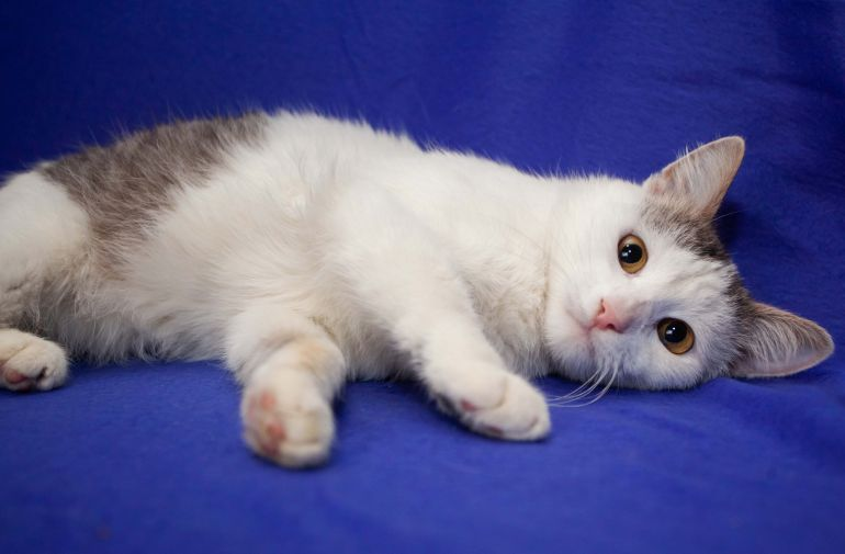 Юный котик Марик