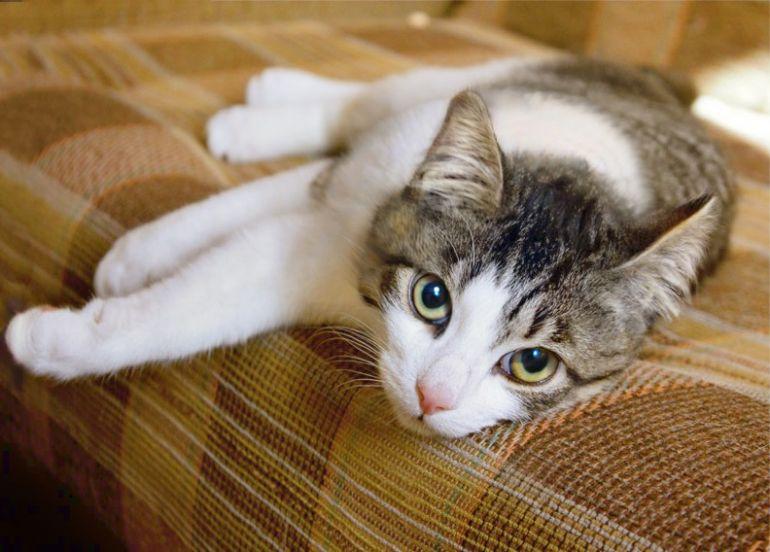 Большеглазка котёнок Эсмиральда ищет дом
