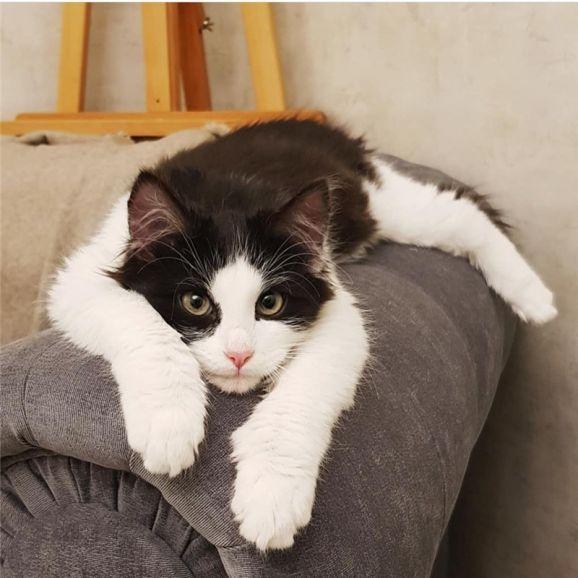 Котёнок Бонифаций ищет свою семью