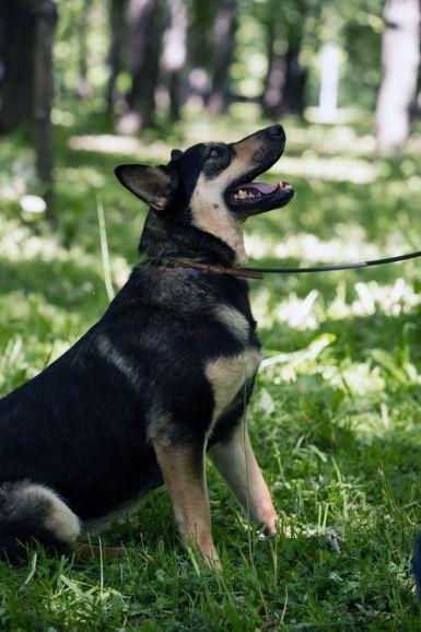 """Бони - собака """"энерджайзер"""" в поиске дома и семьи"""
