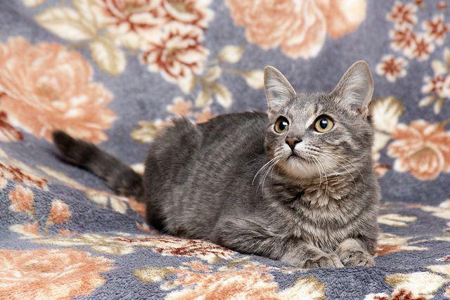 Домовёнок Тишенька, котёнок в дар