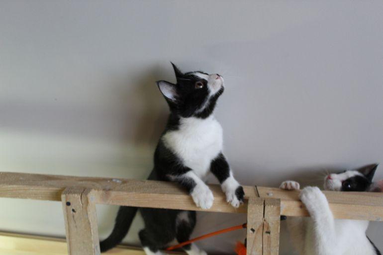 Красивый котёнок в дар