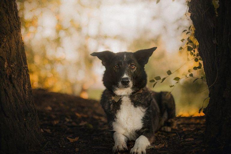 Собачка Джемма ищет хозяев