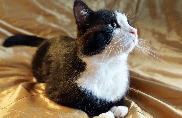 Верный друг одинокий кот Самсон ищет дом