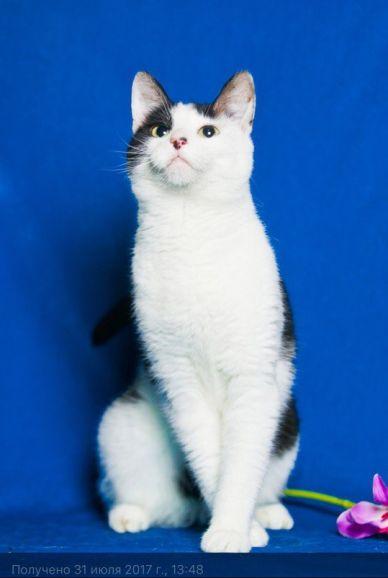 Дуся - молодая активная кошка ищет дом
