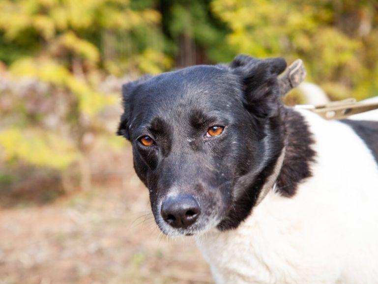 Красивая собака без одной лапки