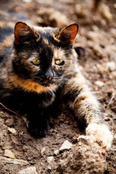Кошка с особенным взглядом