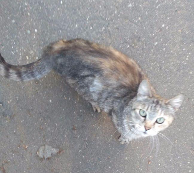 Ищем хозяев для бездомной кошки Муси солидного возраста