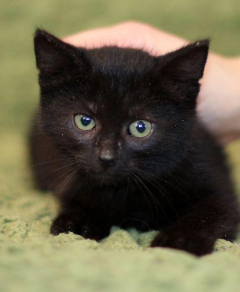 Котёнок Черничка ищет самый лучший дом