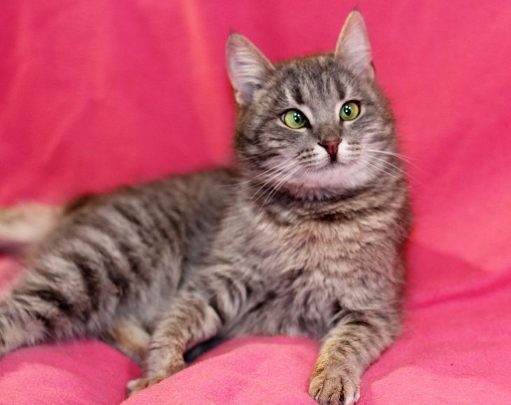 Косоглазое чудо котёнок Панночка в дар