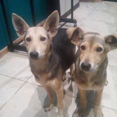 2 щеночка мальчик и девочка в дар