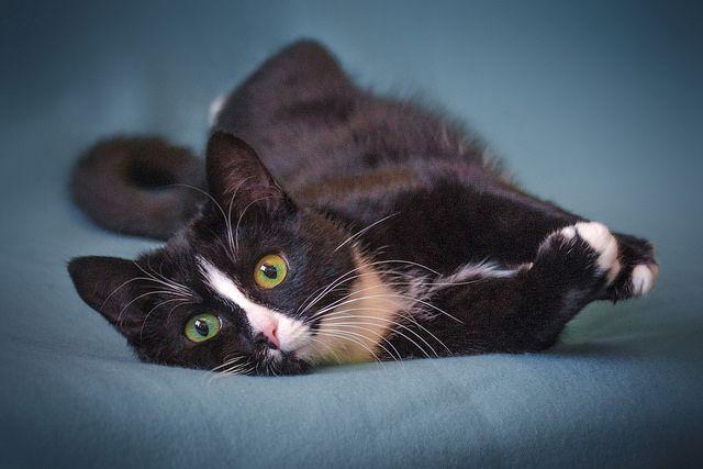 Кошечка Оливка ищет родителей, в любящие руки