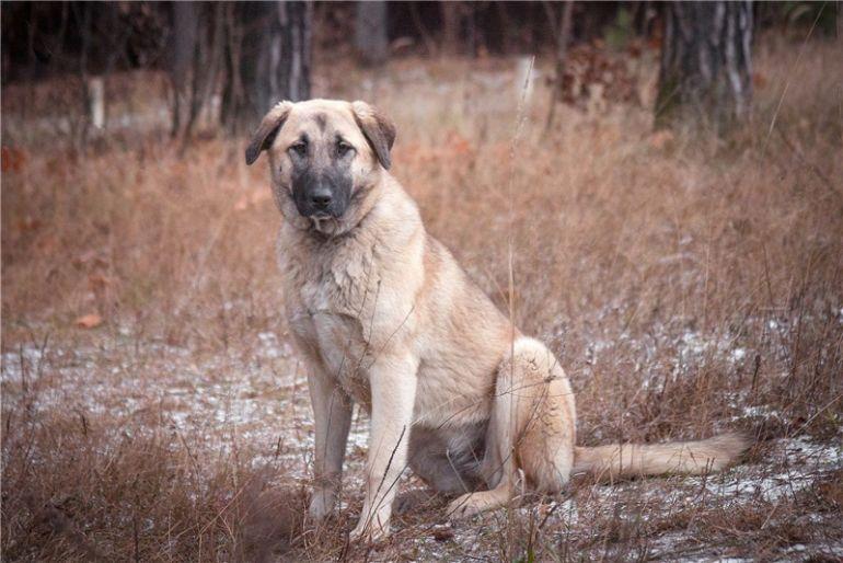 Крупная собака в добрые руки