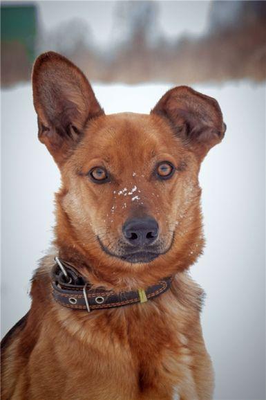 Молодой пёс Льюис ищет дом