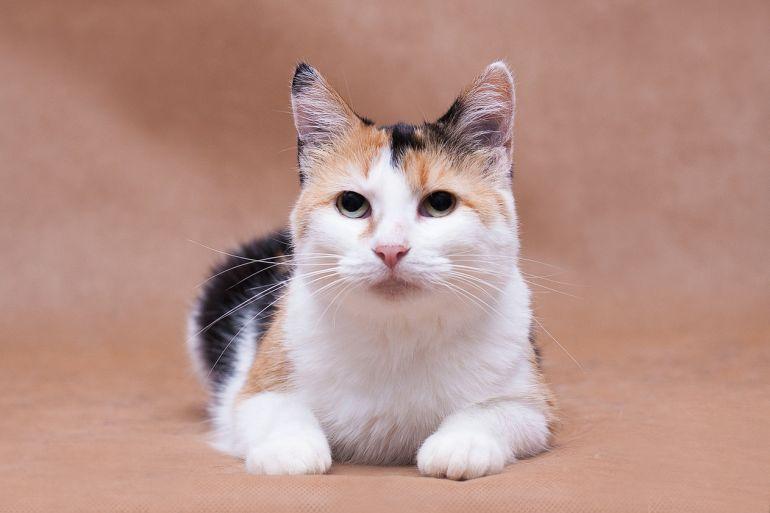 Кошечка Тея мечтает о доме. В любящие руки