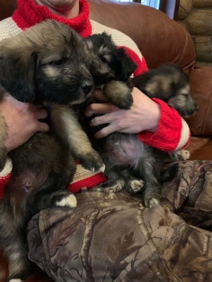 В самые добрые руки отдаются собако-детки