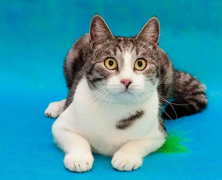 Проша - добрый кот в добрые руки