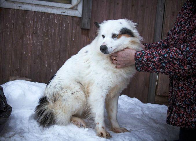 Молодой пёс ищет дом