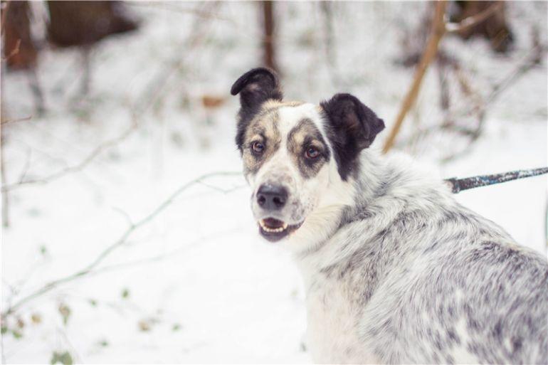 Чудесная собака Белла в добрые руки