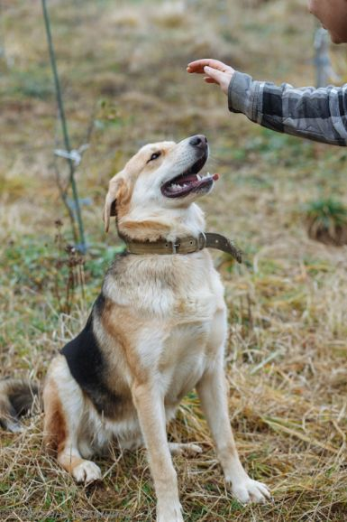 Портос - самый нежный пёс на свете ищет дом