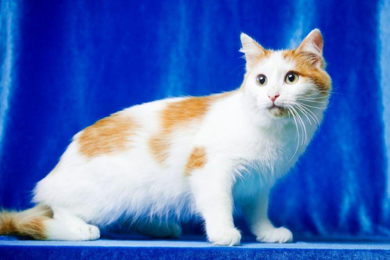 Молодой котик Орфей в дар (10 месяцев)