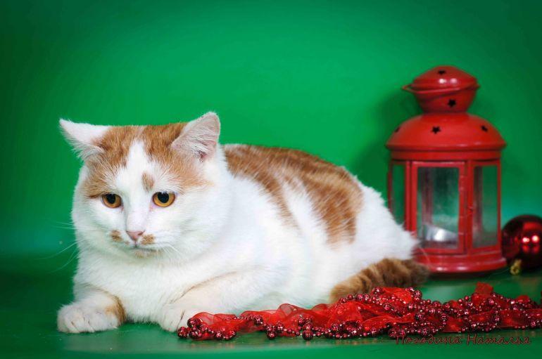 Котик Степашка в дар