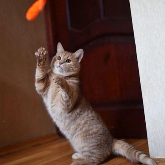 Душевный и игривый кот Руни в активном поиске семьи, 8 месяцев