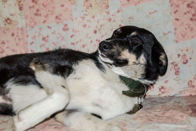 Спокойная и добрая собака-компаньон ищет хозяина