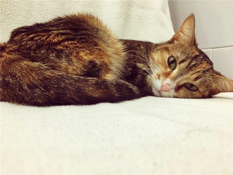 Кошка Китнис ищет дом