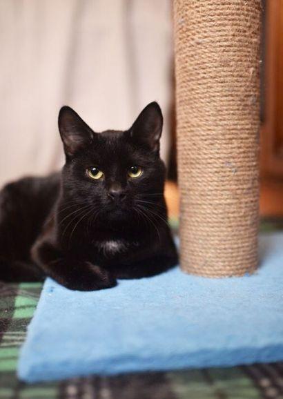 Крупный чёрный котик Моррис в добрые руки, 8 месяцев