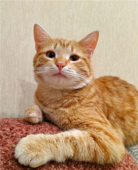 Шикарный котик Персик ищет дом