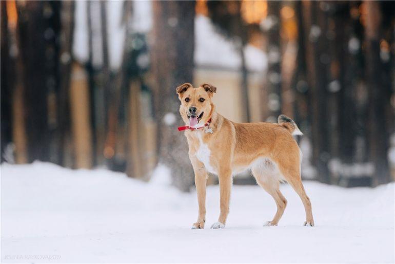 Собачка Грейси ищет дом