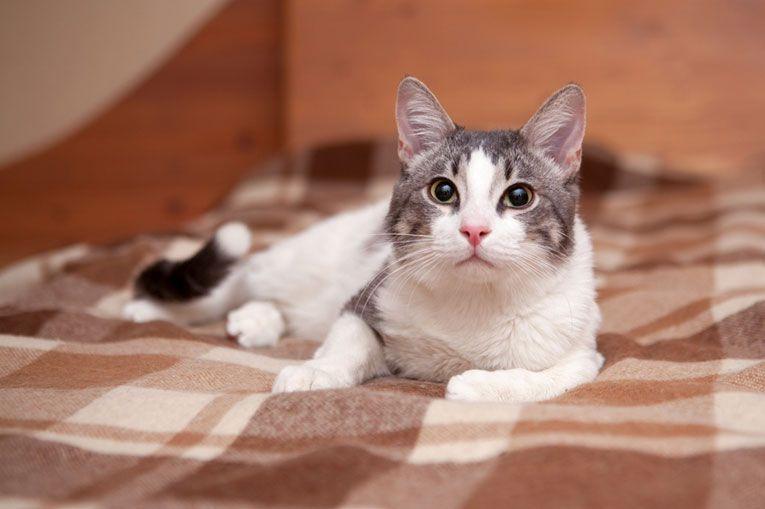 Ласковый и весёлый котик Марсик в добрые руки, 10 месяцев