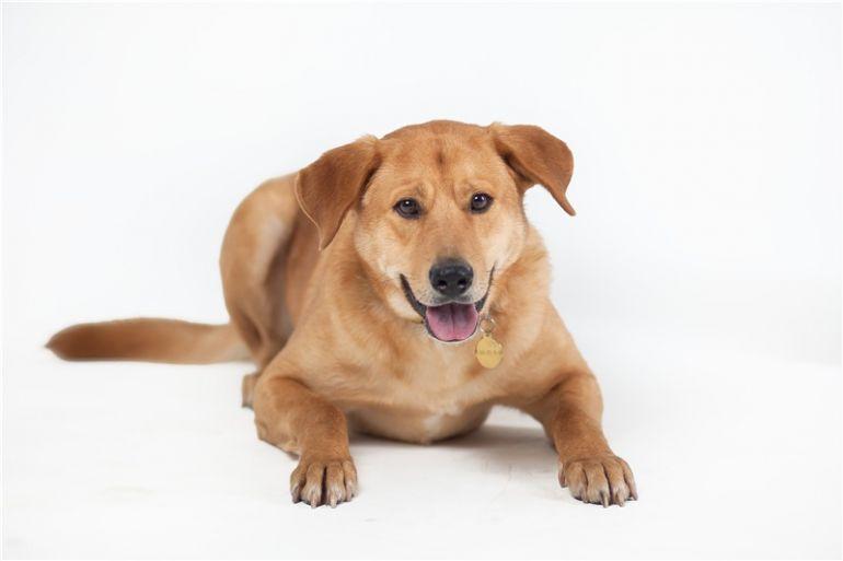 Молодой пёс Бун ищет дом