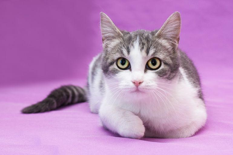 Котенок Тома