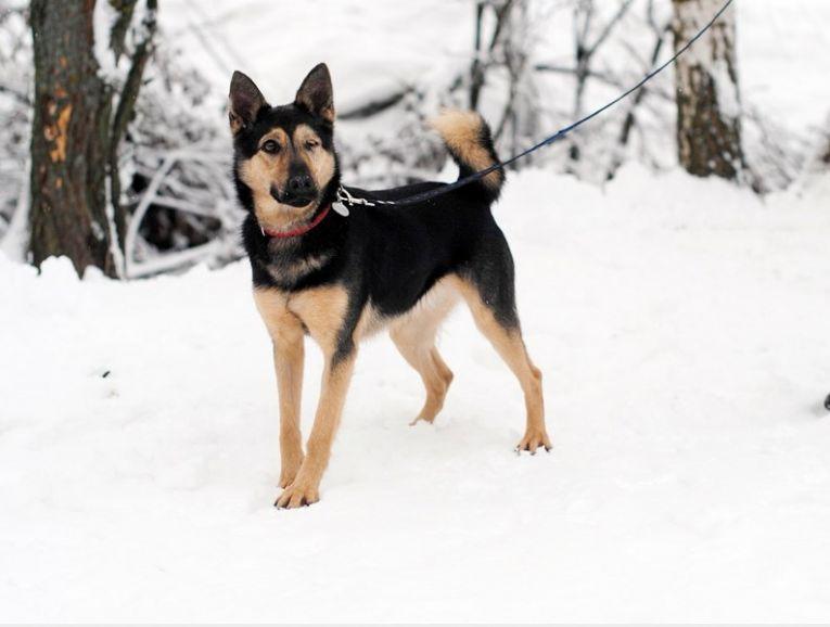 Собака Рори ищет семью