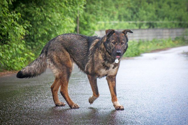 Красивая и умная собака Гера в добрые руки