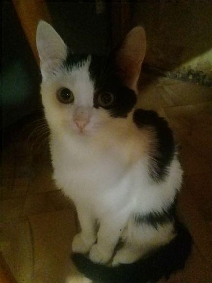 Котёнок Клёпа ищет любящую семью