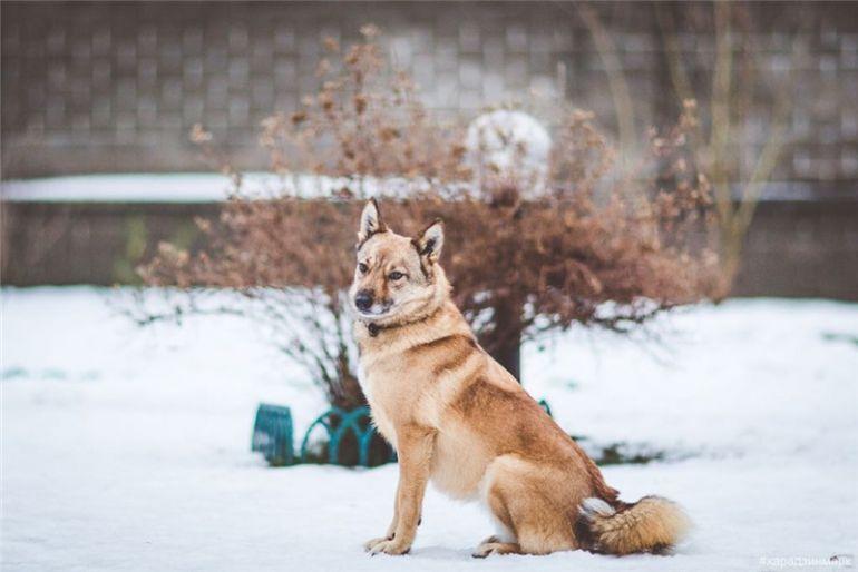 Чудесная собачка Луша ищет дом