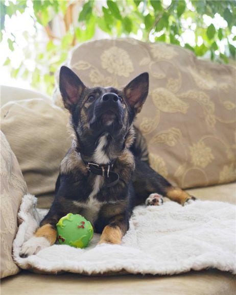 Молодой пёс Гаврош ищет дом