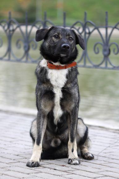 Лютик - спокойный пёс в добрые руки