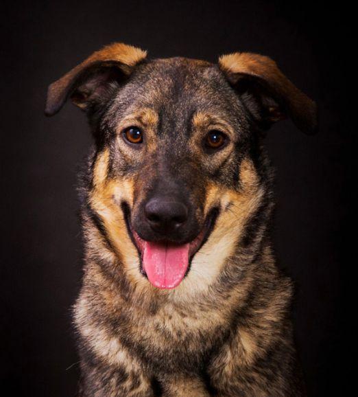 Супер-собака по имени Маруся ищет семью
