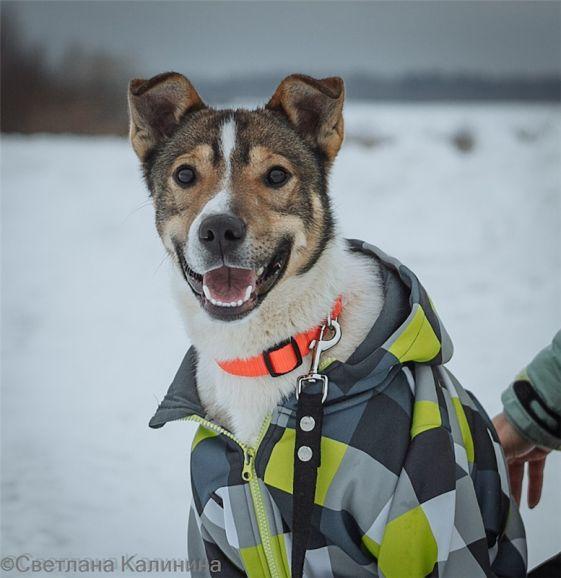 Красивый пёс Сонник Джек ищет семью