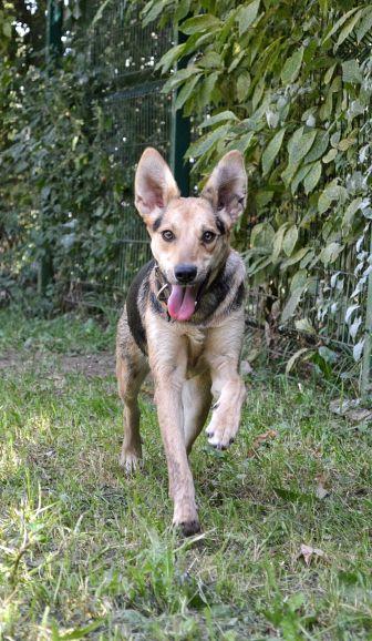 Собака по имени Бонни ищет дом