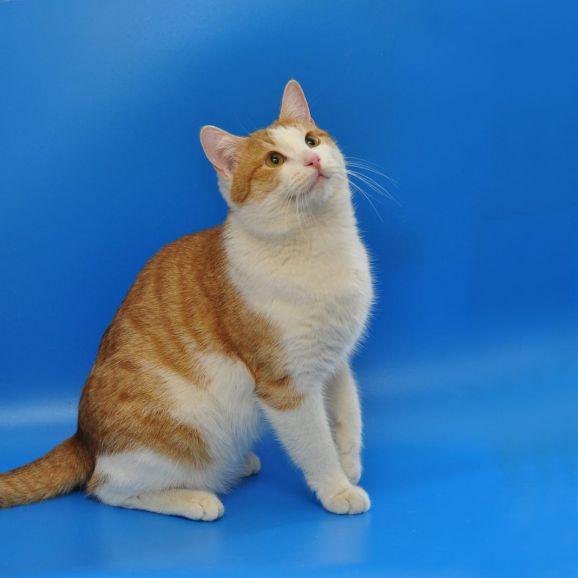 Котик Златик