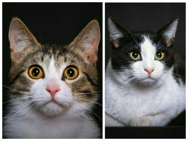 Два веселых кото-брата Васёк и Масёк в добрые руки