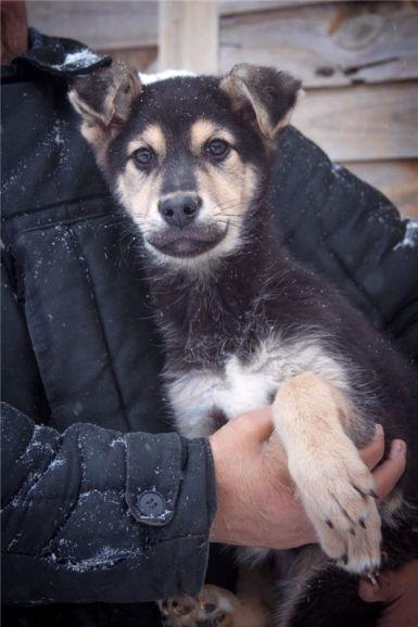 Очаровательный щенок Валет ищет дом